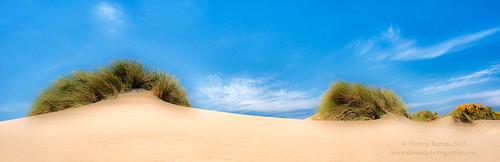 blue green grass yellow oregon landscape gold golden sand pano dunes national area recreation oregondunesnationalrecreationarea 2015 dwoodphotography dwoodphotographycom oregondunespano