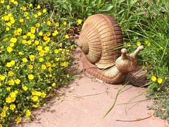 Cast bronze snail sculpture