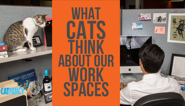 cats-talk-about-workplaces