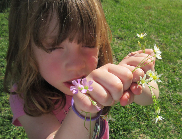She picked these tiny, Canon POWERSHOT ELPH 340 HS