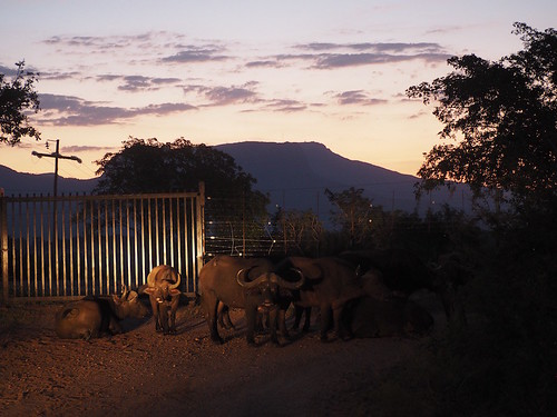 #MeetSouthAfrica : Trip to Kruger National Park & AM Lodge Wildlife Safari