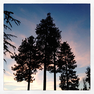sunset-pink sky-tall pine trees