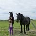 Petting Horses by neas