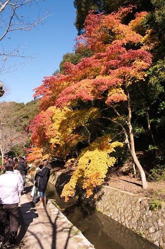 【写真】2012 紅葉 : 哲学の道/2020-10-03/IMGP7375