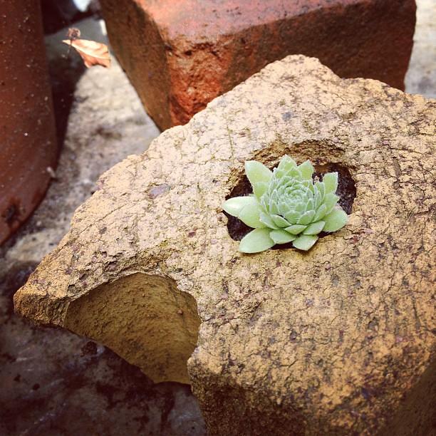 Using old broken bricks in the garden makes me happy.