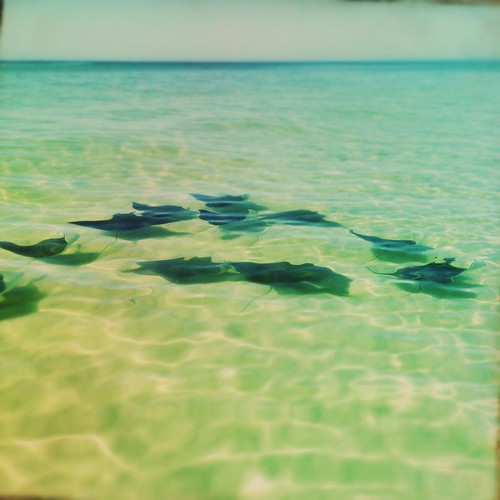 Swim (272/365) by elawgrrl