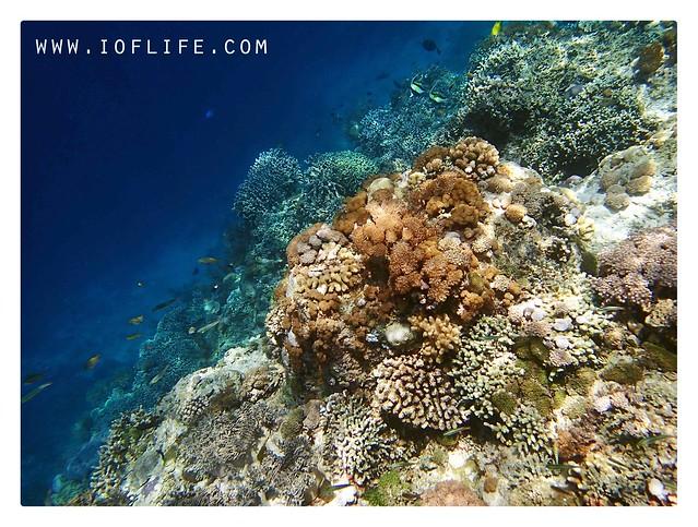 karang dan ikan pulau kambing