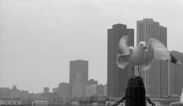 seagull at Navy Pier in Chicago (2002)