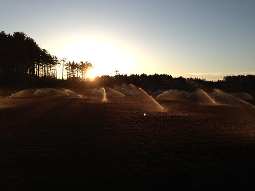Sprinklers spray water on cranberries during a frosty morning. Photo by Jeff LaFleur of Mayflower Cranberries used with permission.
