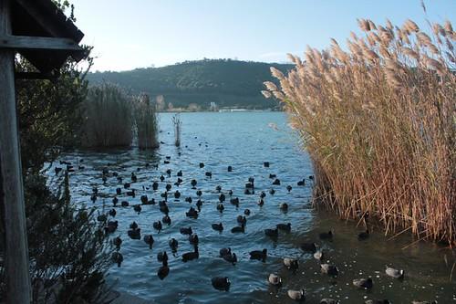 il lago e i suoi abitanti