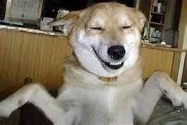 stupid dog