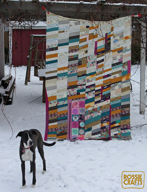 Ron the Half Chevron Quilt Top - whole thing with dog