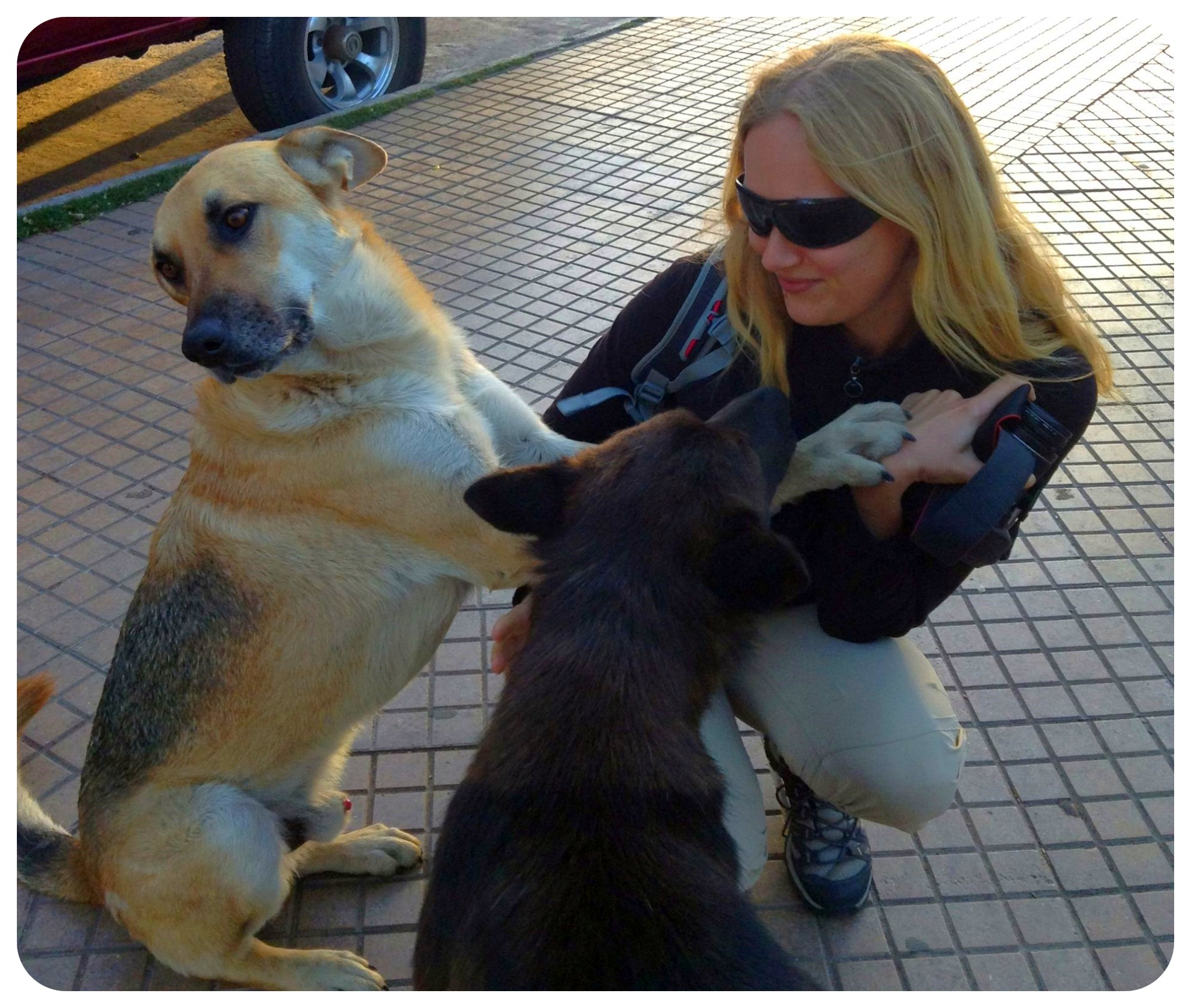 dani with dogs in la serena
