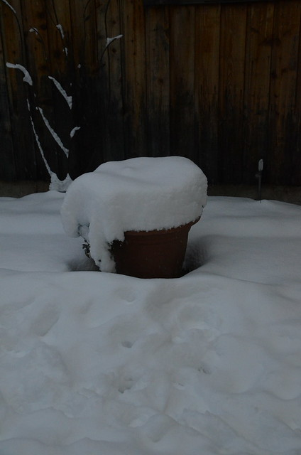 2013-12-15-Winter-276