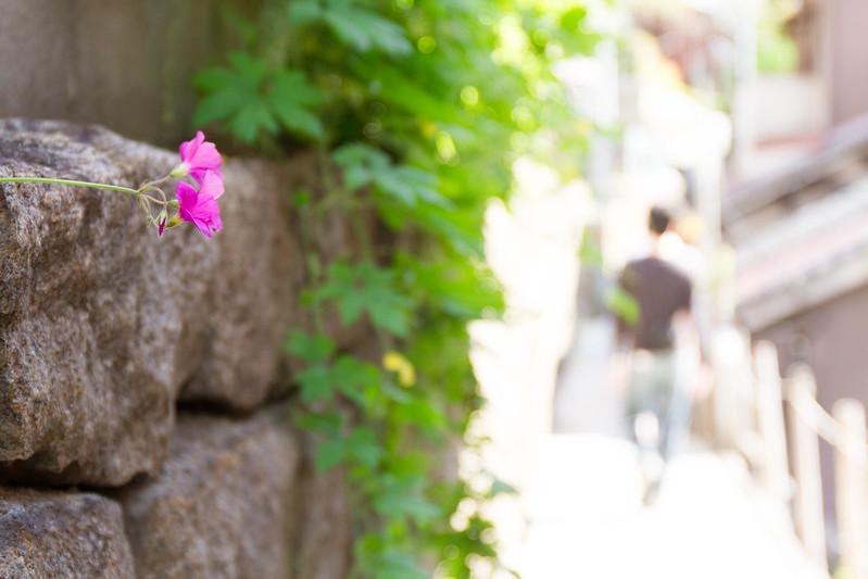 Onomichi 6