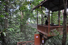 outdoor structure, rainforest, garden, hut, forest, tree house, jungle,
