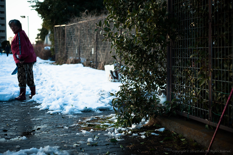 snow cat #2