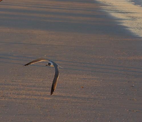 ocean usa beach sunrise sand surf florida gull fl fla bonaire stpetebeach bonairemotel stpetebeachflorida bonaireresort