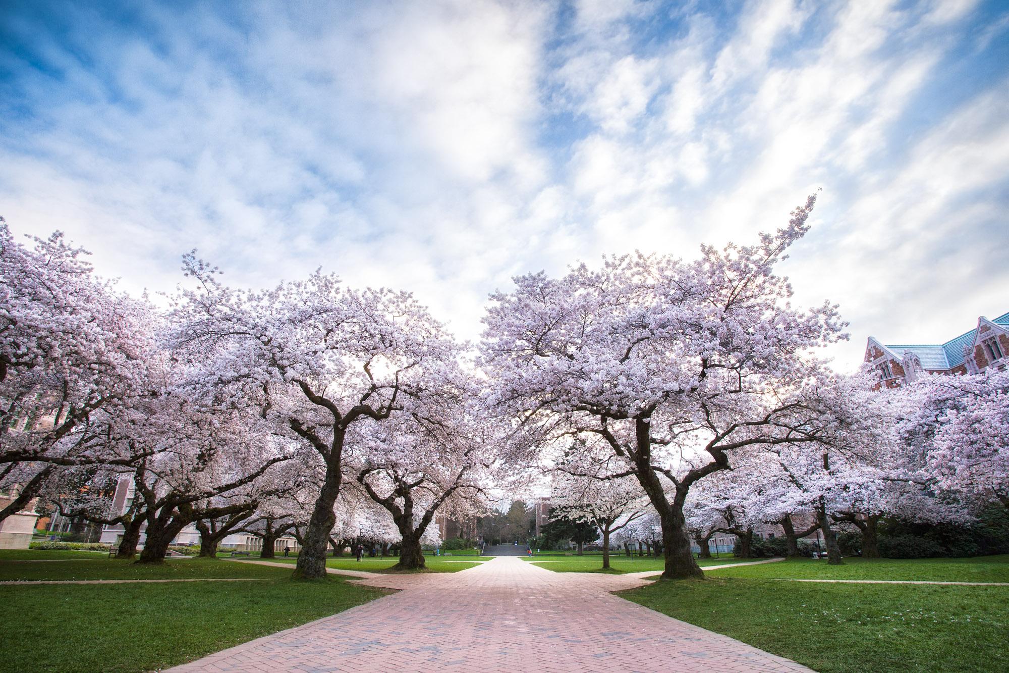 Washington Cherry Blossom Tours