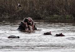 Hippo Play, Ethiopia