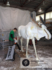 Moose > Making-of
