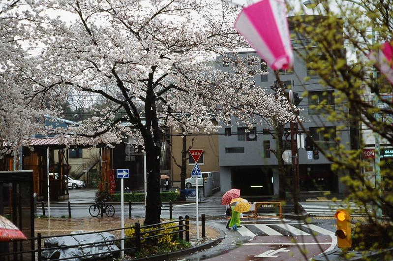rainy day /Harimazaka