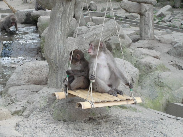 Monkeys on a swing