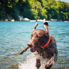 Piper had a perfect weekend at gorgeous Skaneateles Lake in NY. She played in the crystal clear water for hours!!!