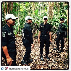 #Repost @hornsandheroes ・・・ Heroes in Indonesia: Rhino Protection Units are the first line of defense for protecting the extremely endangered Sumatran rhino. #irf #hornsandheroesproject #srs #rhinos #rhinoprotectionunit #saverhinos #internationalrhinofoun