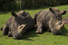 White Rhinos by Jim Mead