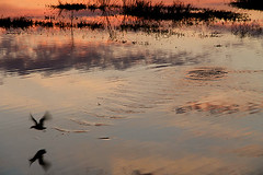 Kamil Jagodzinski - Bird over water