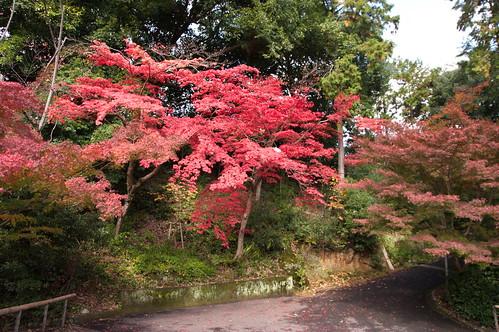 【写真】2012 紅葉 : 光明寺/2020-11-11/IMGP6518