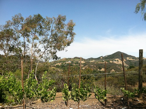 Warm day at Malibu Wines