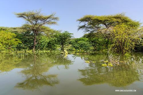 Kenya - Lake Baringo 18