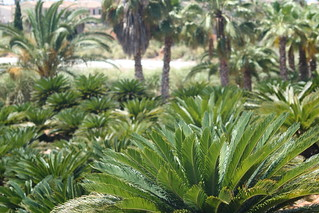 Attēls no Botanicactus. cactus holiday palms island spain mediterranean urlaub insel mallorca botanicalgarden succulents balearen palmen kakteen balearicislands botanischergarten mittelmeer sukkulenten botanicactus