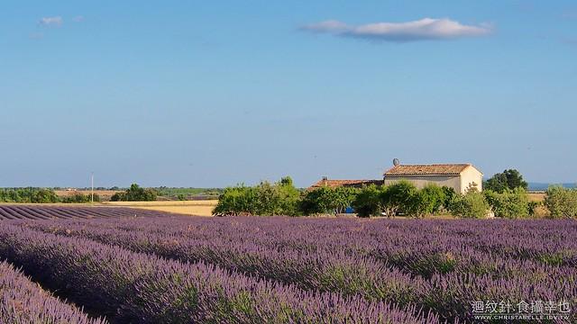 2013 Lavender@Valensole, Provence, France