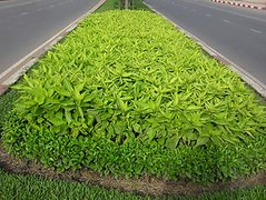 shrub, grass, plant, herb, produce, hedge,