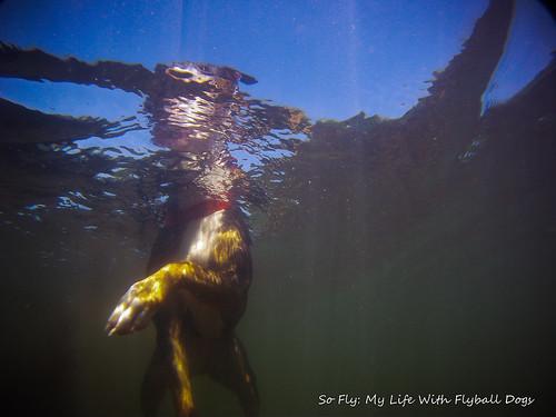 GoPro Under Water-5918
