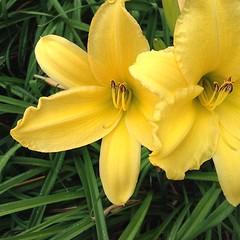 Pretty. #flowers