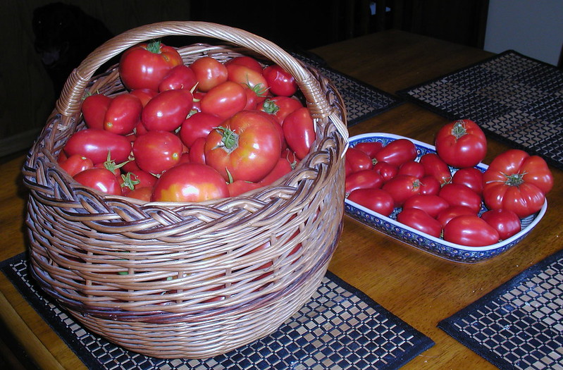 TomatenBountifulPick