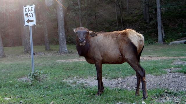 DSC06633 240813 Lone Elk Park
