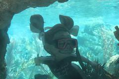 coral reef, underwater diving, sea, recreation, outdoor recreation, marine biology, divemaster, water sport, underwater, freediving, reef,