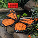 LEGO Monarch Butterfly by bruceywan