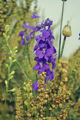 blossom(0.0), digitalis(0.0), flower(1.0), plant(1.0), wildflower(1.0), flora(1.0), delphinium(1.0),