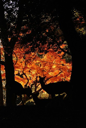 The autumnal scene of Nara.