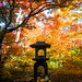 momiji '13 - autumn leaves #12 (Houkyou-in temple, Kyoto) by Marser