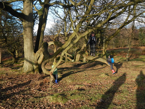 A christmas walk at longshaw no time for ironing - Woodlands swimming pool allestree ...