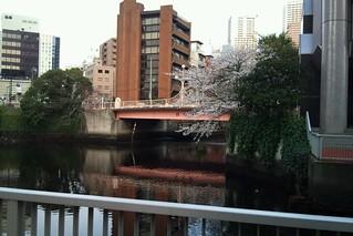 2011年5月6日・芝浦・芝浦運河沿緑地