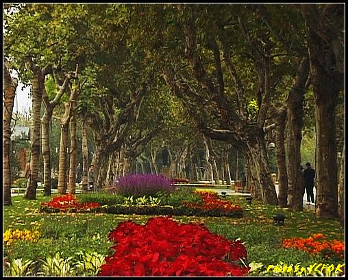杭州 西湖 (其他景點) - 083 (湖濱路的湖畔花園)