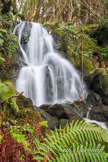 Karn Falls - Waterfall in Downhill Forest.